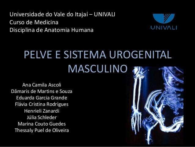 PELVE E SISTEMA UROGENITAL MASCULINO Ana Camila Ascoli Dâmaris de Martins e Souza Eduarda Garcia Grande Flávia Cristina Ro...