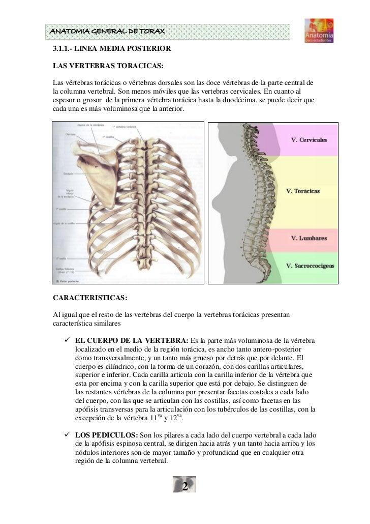 Esqueleto Toracico