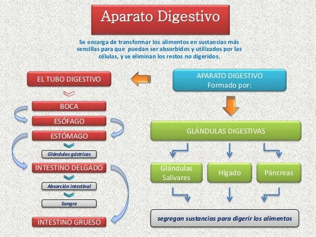 Esquema aparato digestivo