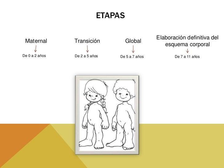 LEYES DE MADURACION•   LEY CEFALO CAUDAL; Desarrollo que se extiende a través del    cuerpo desde la cabeza hasta las extr...