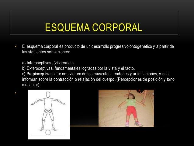 Esquema corporal por Paola Pilar Guevara Slide 3
