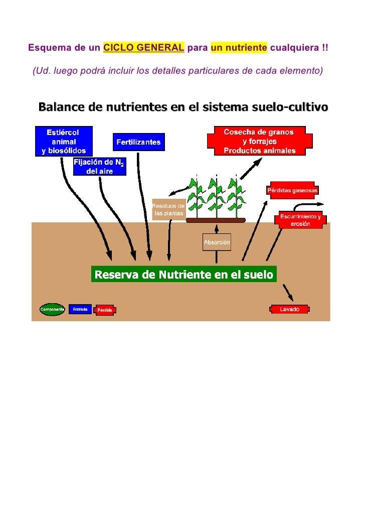 Esquema de un CICLO GENERAL para un nutriente cualquiera !!  (Ud. luego podrá incluir los detalles particulares de cada el...