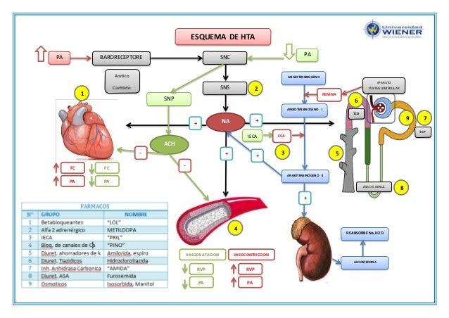 sugerencias de gran alcance en niveles de hipertensión arterial