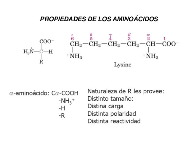 Esquemas Clase Aminoacidos Y Peptidos