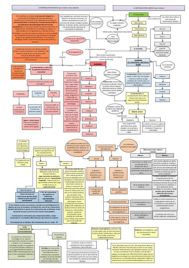 LA REPRODUCCIÓN SEXUAL (por meiosis y fecundación)                                                                        ...
