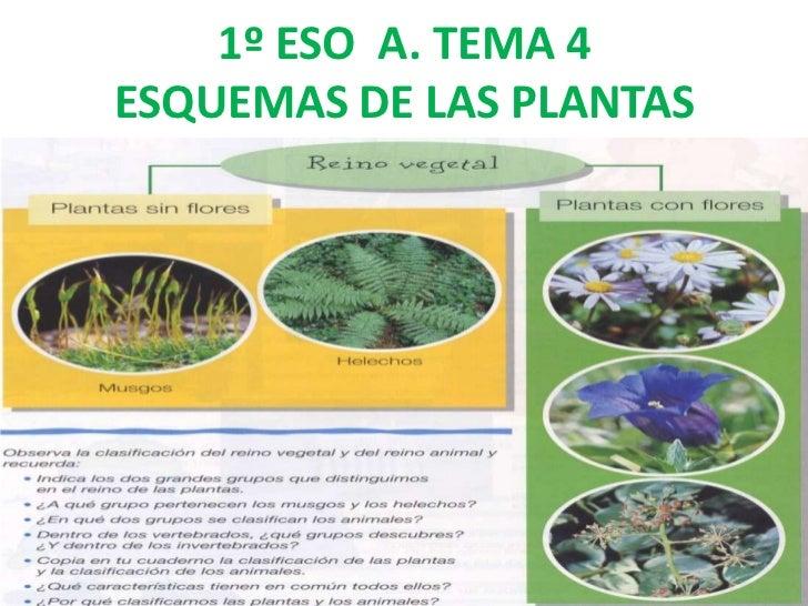 1º ESO A. TEMA 4ESQUEMAS DE LAS PLANTAS