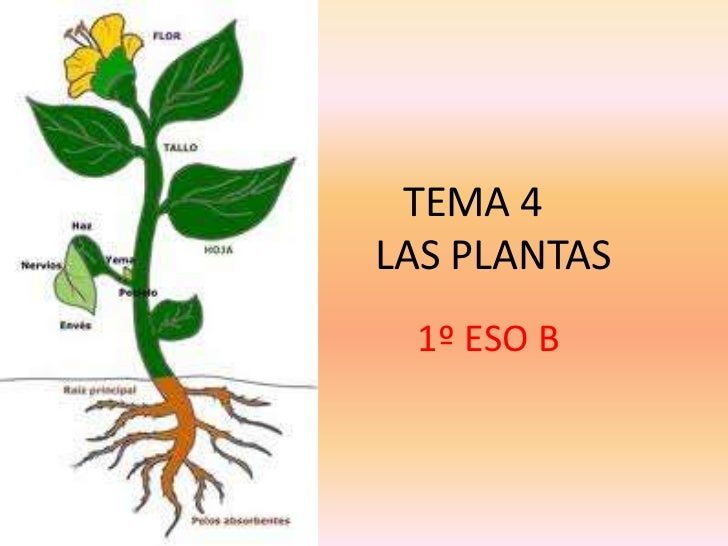 TEMA 4LAS PLANTAS 1º ESO B