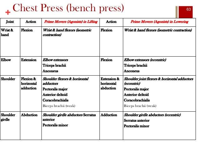 eccentric and concentric bench press comparison Developing explosive power: a comparison of technique a comparison of technique and training suggest that the and, eccentric-concentric bench press.