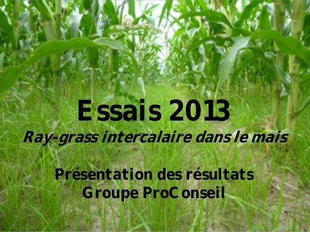 Essais 2013 Ray-grass intercalaire dans le mais Présentation des résultats Groupe ProConseil