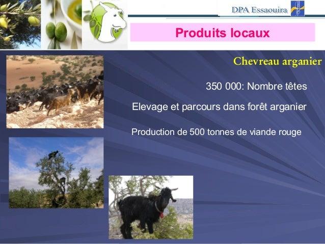 Chevreau arganier Nombre têtes:000350 Elevage et parcours dans forêt arganier Production de 500 tonnes de viande rouge Pro...