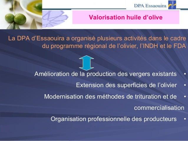 Valorisation huile d'olive La DPA d'Essaouira a organisé plusieurs activités dans le cadre du programme régional de l'oliv...