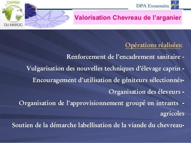 Valorisation Chevreau de l'arganier :eséalisérations réOp -Renforcement de l'encadrement sanitaire -Vulgarisation des nouv...