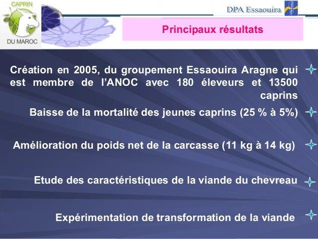 Principaux résultats Création en 2005, du groupement Essaouira Aragne qui est membre de l'ANOC avec 180 éleveurs et 13500 ...