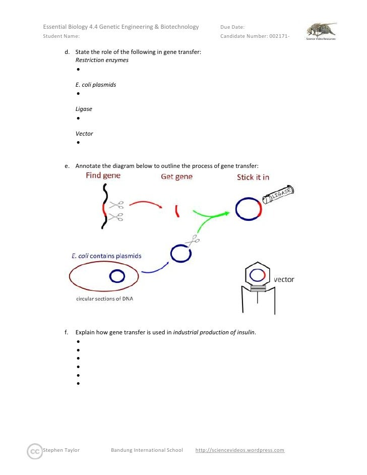 Essential biology 044 genetic engineering biotechnology state the role of complementary base pairing in pcr ccuart Gallery