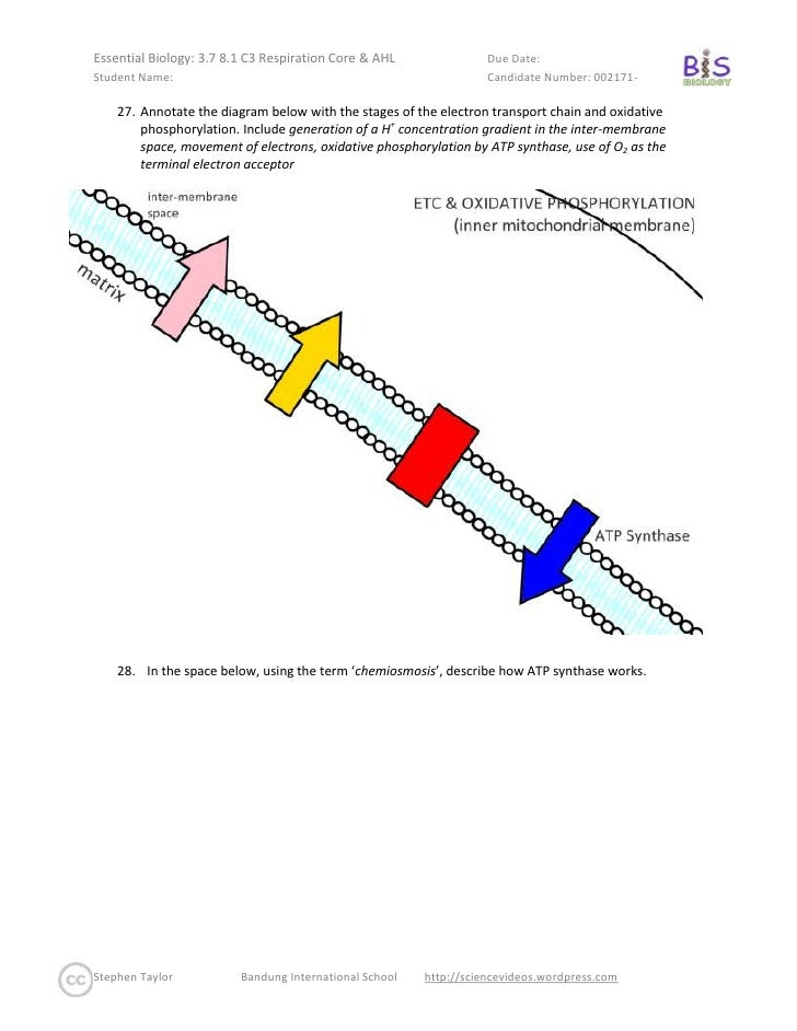 Essential biology respiration core ahloption c 7 label the diagram ccuart Choice Image
