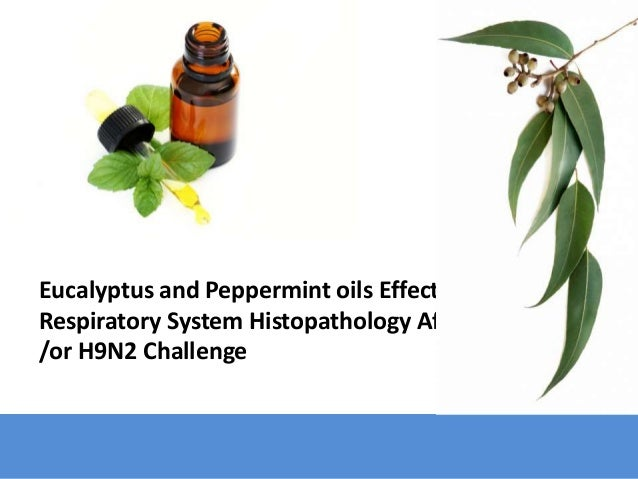 Eucalyptus and Peppermint oils Effect on Respiratory System Histopathology After MG and /or H9N2 Challenge