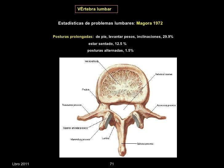 Estabilizadores de columna vertebral