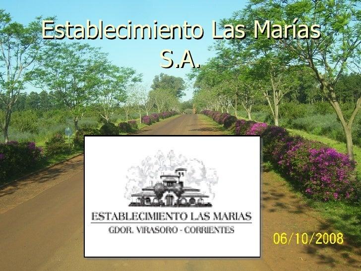 Establecimiento Las Marías S.A.