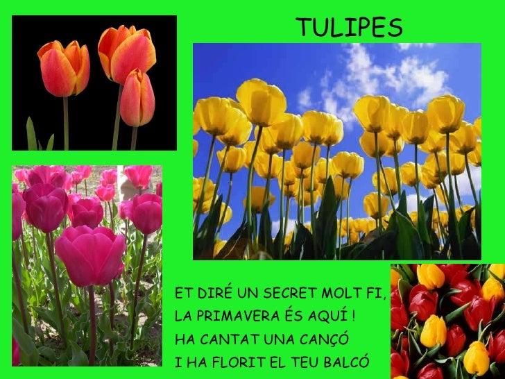 Resultado de imagen de et dire un secret molt fi la primavera