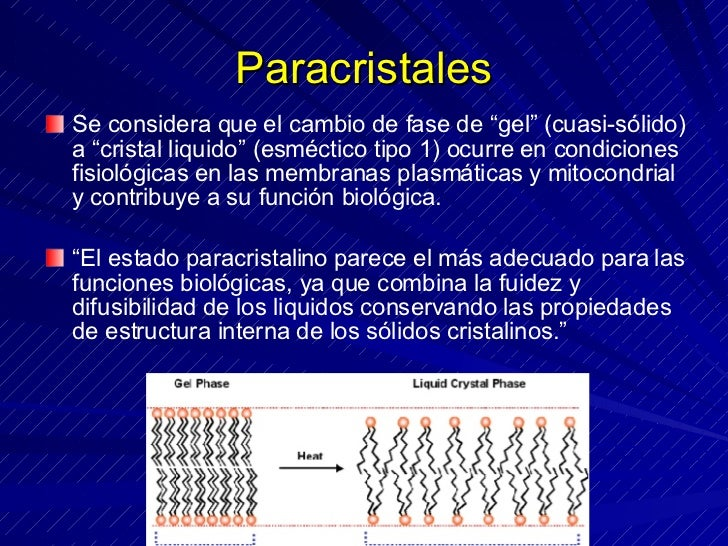 """Paracristales <ul><li>Se considera que el cambio de fase de """"gel"""" (cuasi-sólido) a """"cristal liquido"""" (esméctico tipo 1) oc..."""