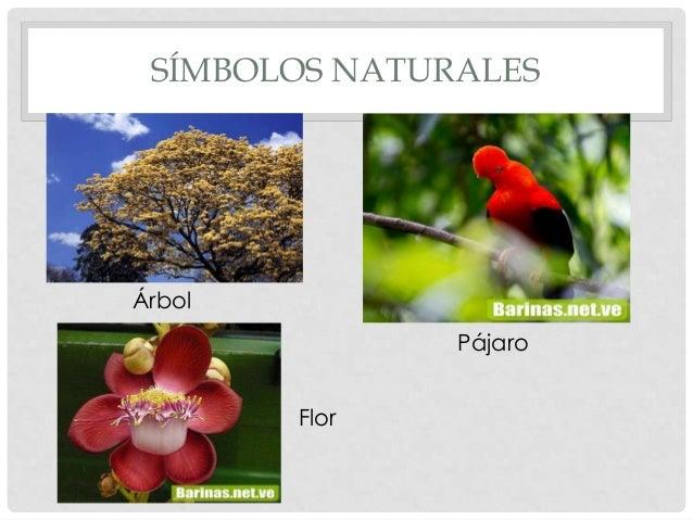 Simbolos Naturales De Barina | estado barinas