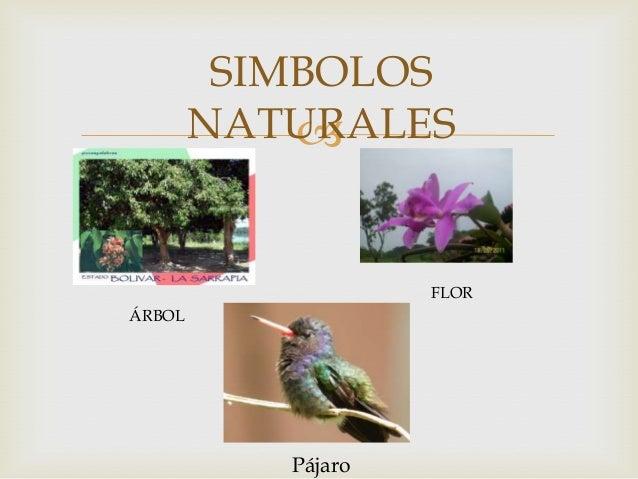 Estado Bolivar Simbolos Naturales | estado bolivar diana canosa