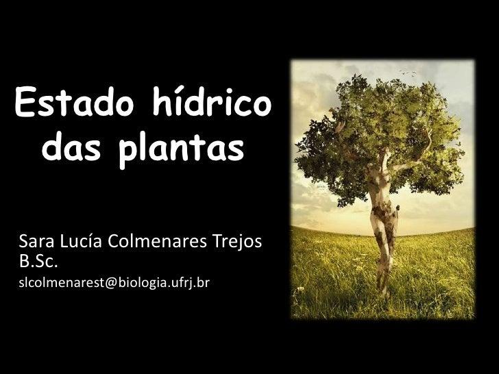 Estado hídrico das plantas <br />Sara Lucía Colmenares TrejosB.Sc.<br />slcolmenarest@biologia.ufrj.br<br />