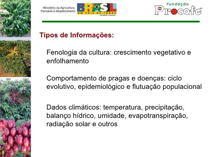 Tipos de Informações: Fenologia da cultura: crescimento vegetativo e enfolhamento Comportamento de pragas e doenças: ciclo...