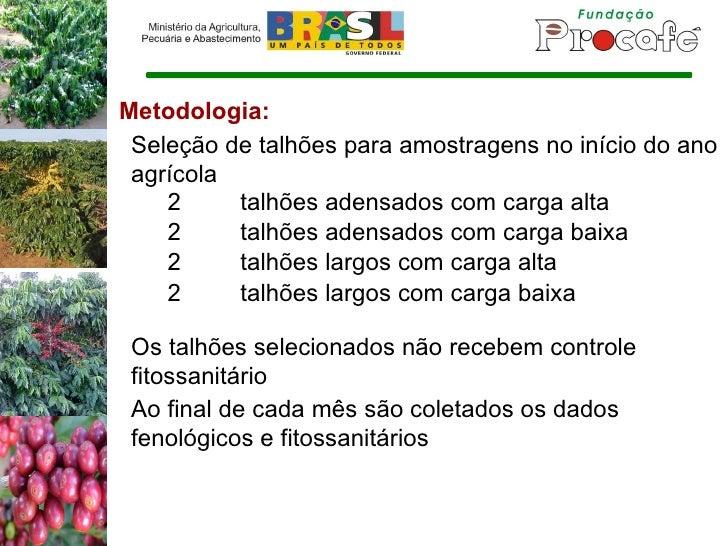 Metodologia: Seleção de talhões para amostragens no início do ano agrícola 2 talhões adensados com carga alta 2 talhões ad...