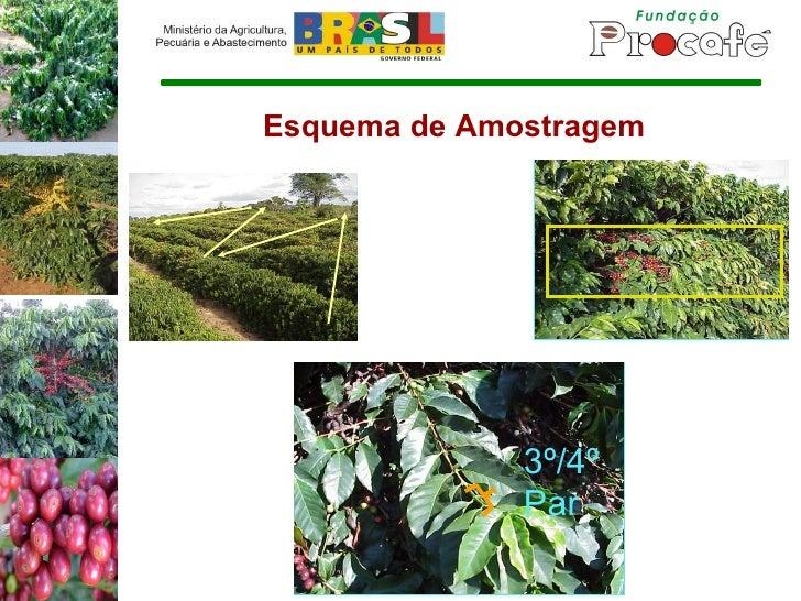 Esquema de Amostragem 3º/4º Par