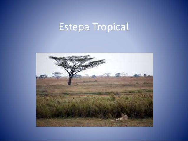 Estepa Tropical