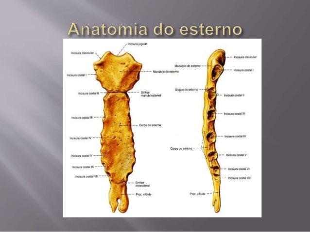 Esterno for O osso esterno e dividido em
