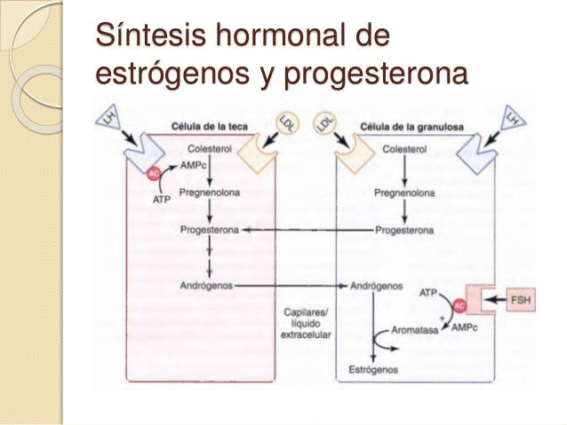 fsh and lh steroid hormones