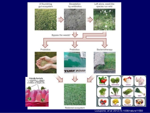 Ecological Disturbance Of The Human Gut Microbiome