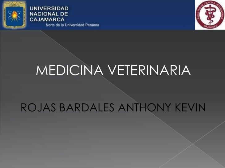 MEDICINA VETERINARIA<br />ROJAS BARDALES ANTHONY KEVIN<br />