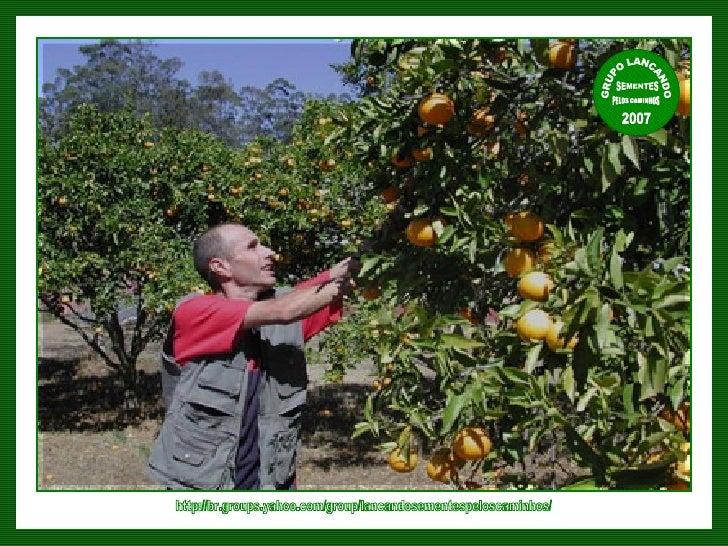 http://br.groups.yahoo.com/group/lancandosementespeloscaminhos/ GRUPO LANCANDO  SEMENTES  PELOS CAMINHOS 2007