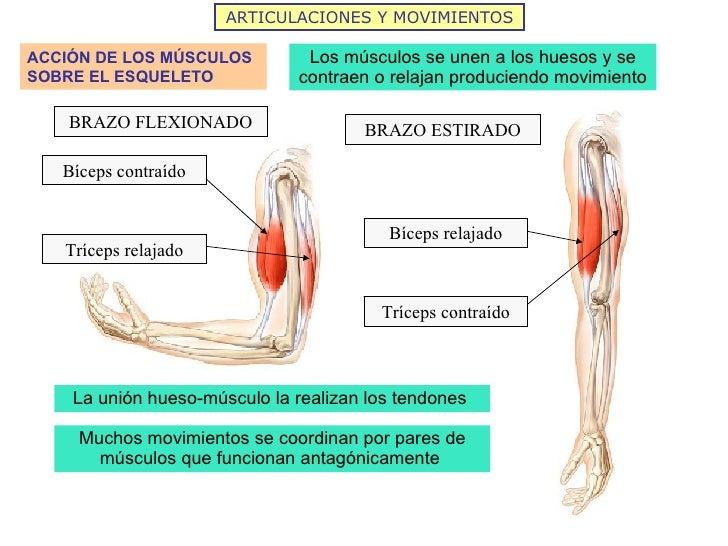 Fantástico Diagrama De Hueso Del Hombro Fotos - Anatomía de Las ...