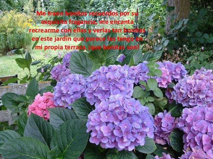 Me traen bonitos recuerdos por su exquisita fragancia, me encanta recrearme con ellas y verlas tan bonitas en este jardín ...