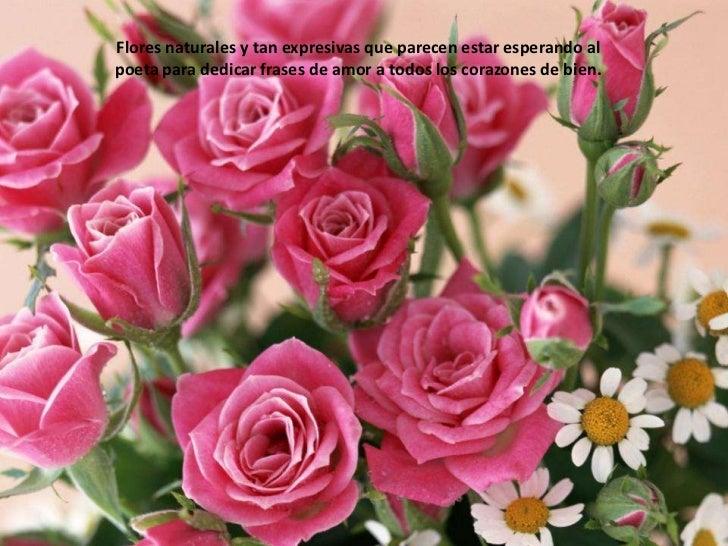 Flores naturales y tan expresivas que parecen estar esperando al poeta para dedicar frases de amor a todos los corazones d...
