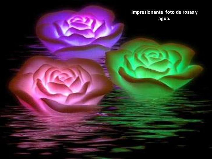 Impresionante  foto de rosas y agua.<br />