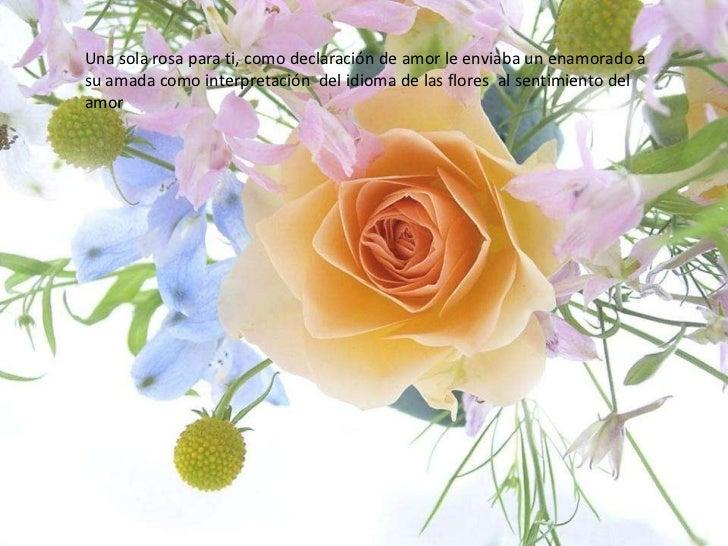 Una sola rosa para ti, como declaración de amor le enviaba un enamorado a su amada como interpretación  del idioma de las ...