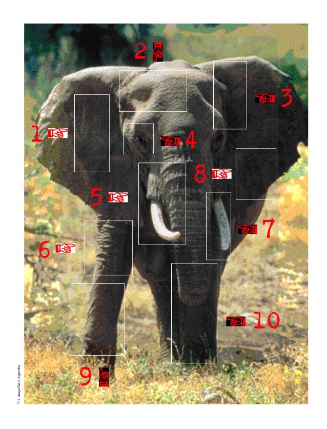 Estrategia - El Elefante