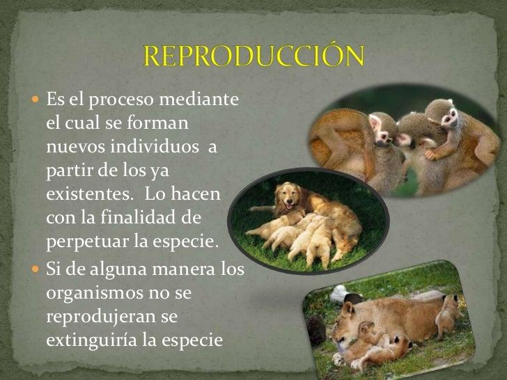 Estrategias de reproduccion de los organismos Slide 3
