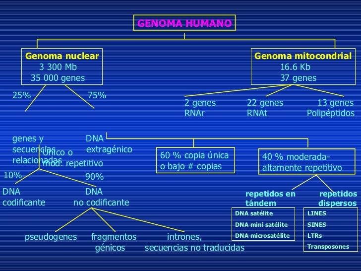 Estructura Y Funciones Del Genoma Humano