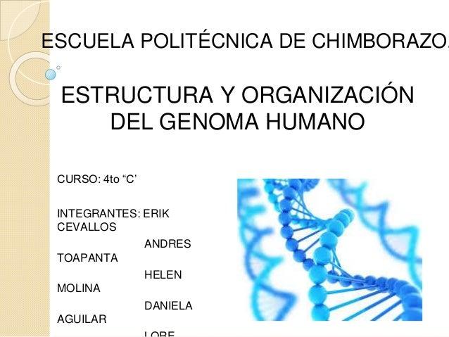 Estructura Y Organizacon Del Genoma Humano 1 2