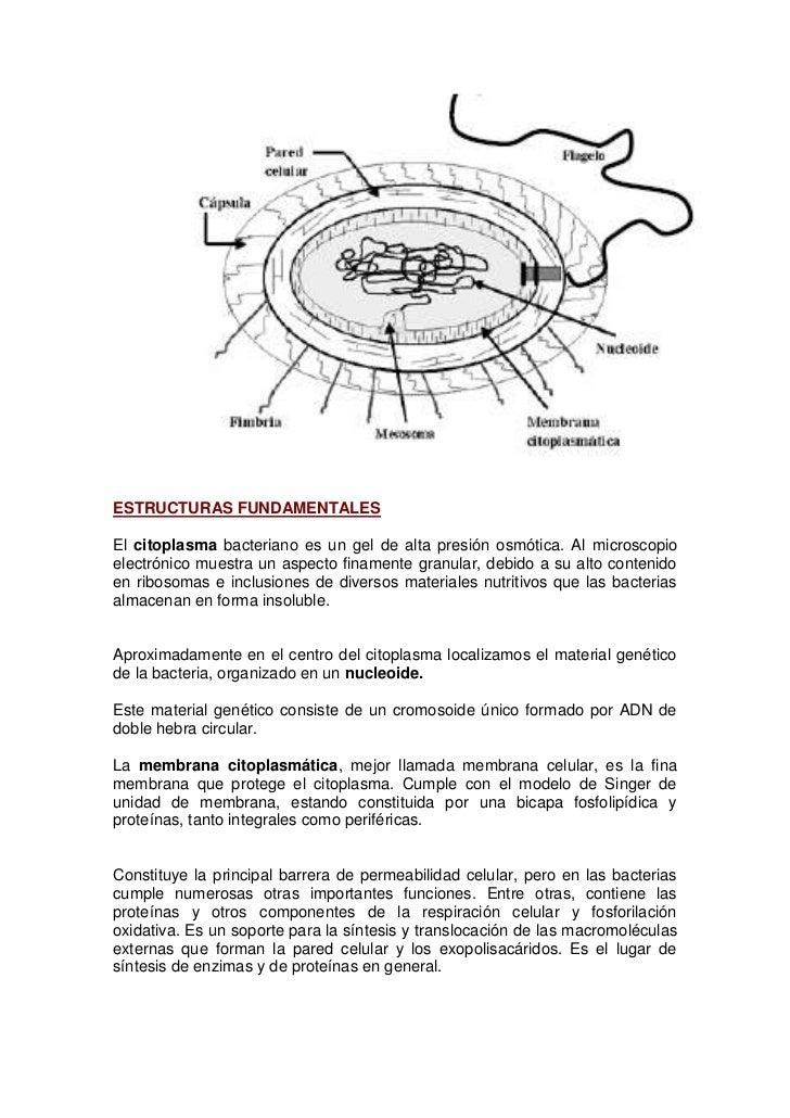Estructura anatómica y composición físico de las bacterias
