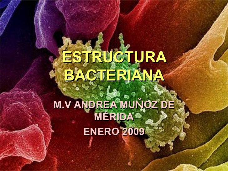 ESTRUCTURA BACTERIANAM.V ANDREA MUŇOZ DE       MÉRIDA     ENERO 2009