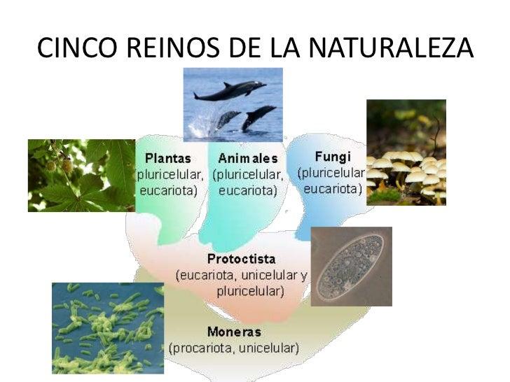 CINCO REINOS DE LA NATURALEZA<br />