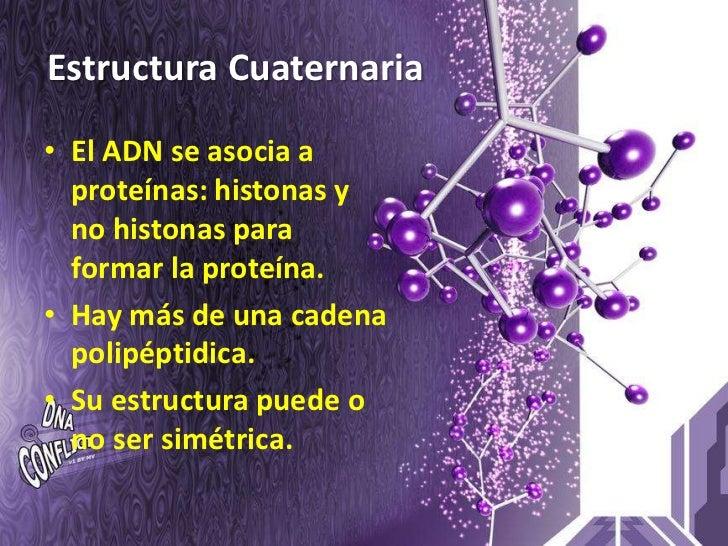 Estructura Cuaternaria  • El ADN se asocia a   proteínas: histonas y   no histonas para   formar la proteína. • Hay más de...
