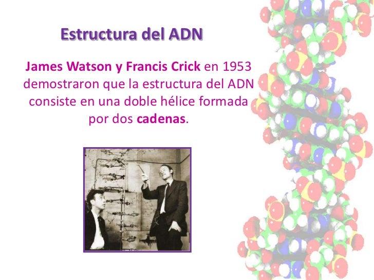 Estructura del ADN James Watson y Francis Crick en 1953 demostraron que la estructura del ADN  consiste en una doble hélic...